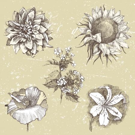 eleganz: 5 sehr detaillierte Hand gezeichnet Blumen im Retro-Stil Illustration