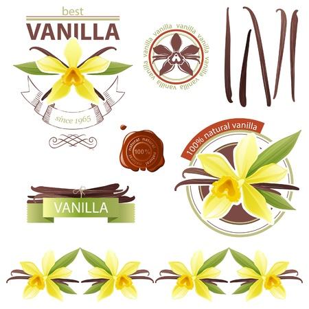 bean pod: Design elements with vanilla flowers