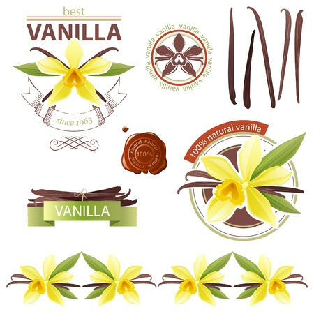 flor de vainilla: Elementos de diseño con flores de vainilla Vectores