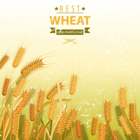 Wheat field with place for your text Vector