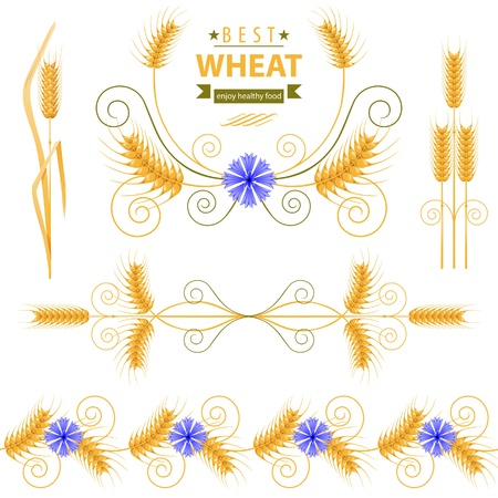 Wheat design elements set Vector
