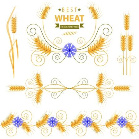corn flower: Wheat design elements set