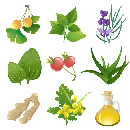 Plants icons for herbal medicine Vector
