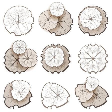 Árboles - vista superior. Fácil de usar en sus proyectos de diseño del paisaje! Ilustración de vector