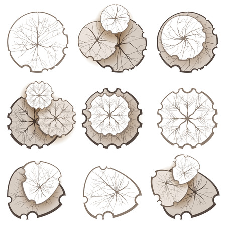 tree top view: Trees - top view. Easy to use in your landscape design projects!  Illustration