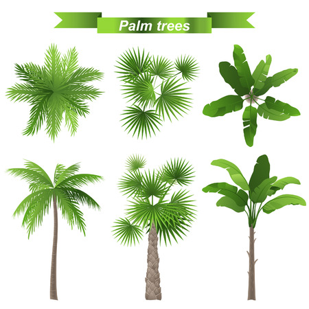 foliage frond: 3 different palm trees - top and front view Illustration