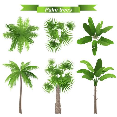 bovenaanzicht plant: 3 verschillende palmbomen - boven-en vooraanzicht
