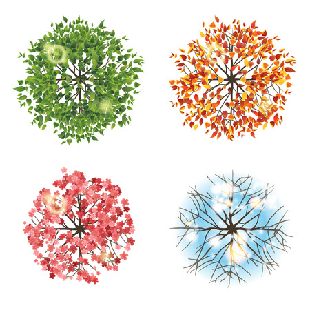view: Tree icon in 4 different seasons - top view. Easy to use in your landscape design projects!