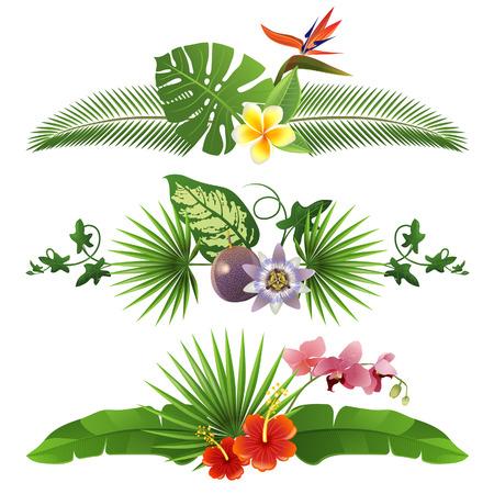 熱帯: 葉と花から 3 装飾的な熱帯ボーダー