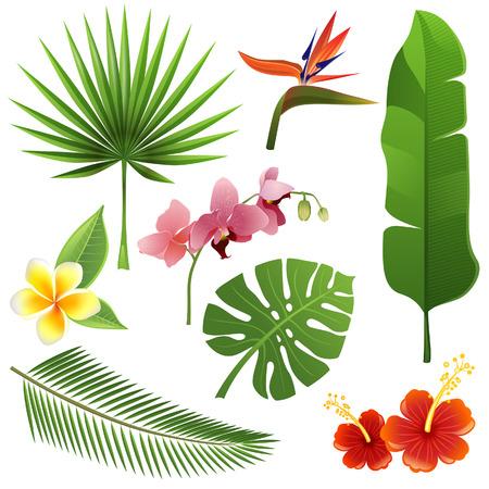 熱帯の葉と花のセット  イラスト・ベクター素材