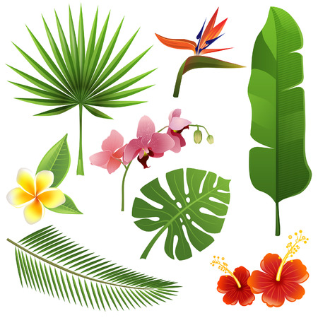 fronds: Set of tropical leaves and flowers Illustration