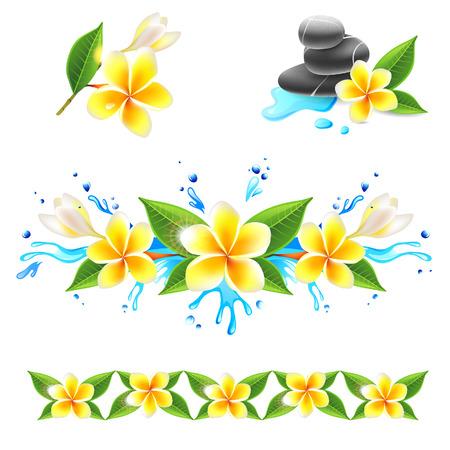 Frangipani flowers set Vector