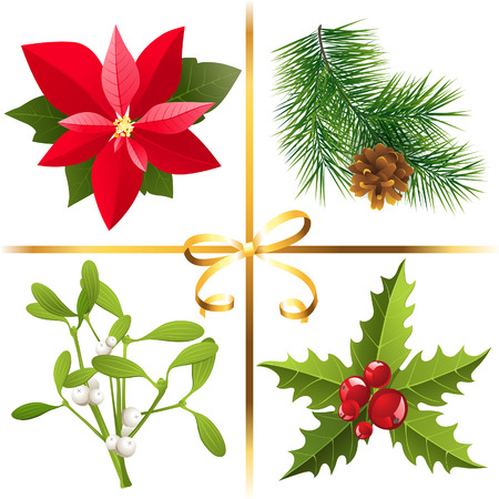 poinsettia: 4 highly detailed Christmas plants