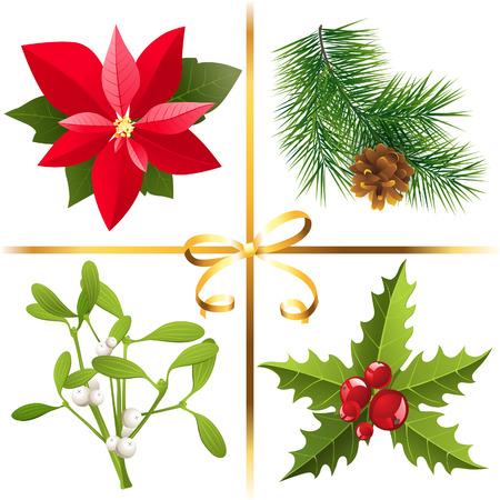 flor de pascua: 4 plantas altamente detallados de Navidad