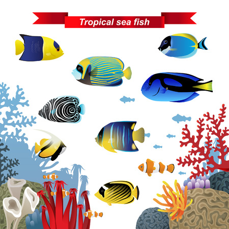 clown tang: Coral reef fishes