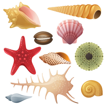 Bright highly detailed seashell icons Banco de Imagens - 24696790