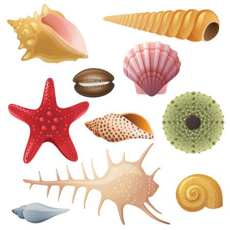 Brillantes iconos altamente detallados de concha