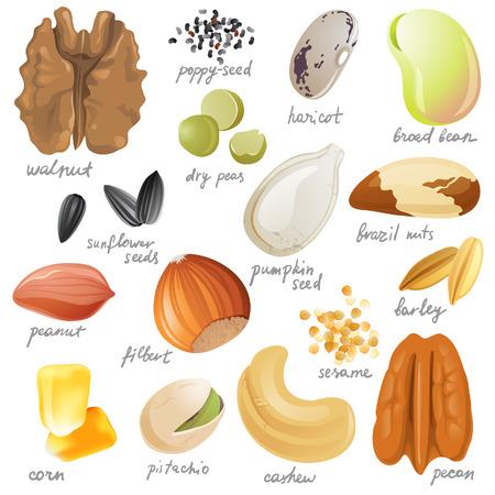 produits céréaliers: Graines comestibles, les noix et les haricots Illustration
