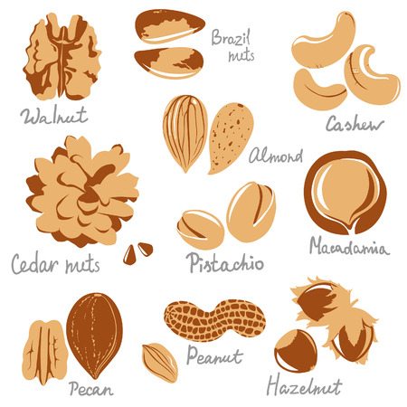 stylized nuts icons Vector