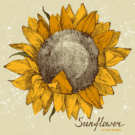 hand drawn sunflower in retro style Çizim