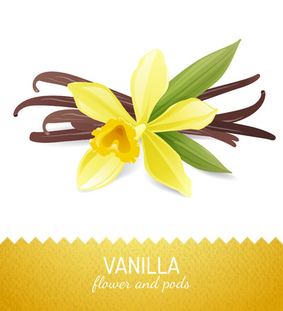 green bean: vanilla flower and pods over white background