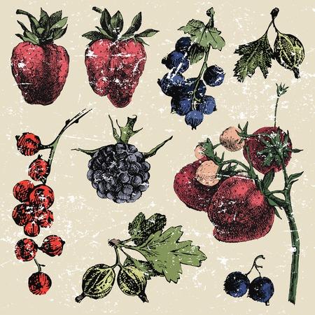 dewberry: Hand dawn berries in vintage style