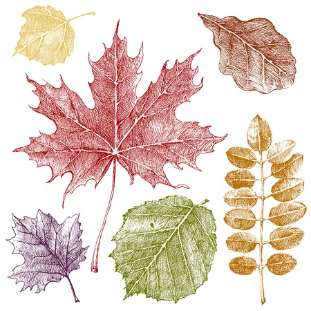 Hand drawn autumn leaves set Vector
