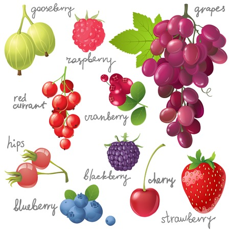 Great berries set over white background Vector