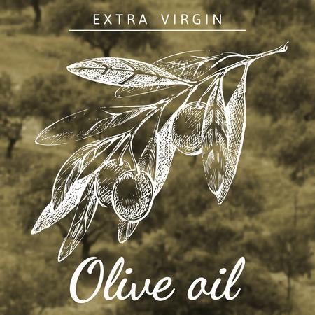 aceite de oliva virgen extra: Dibujado a mano la rama de olivo sobre fondo de paisaje