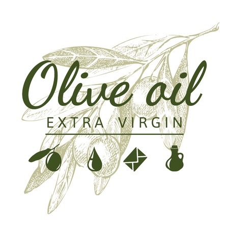 Hand drawn olive branch and olive oil logo Illustration
