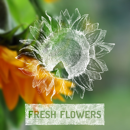 fresh flowers: Fresh flowers poster with hand drawn sunflower Illustration