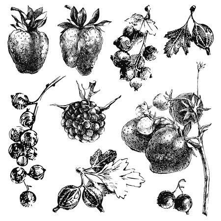 Black and white hand dawn berries Vector