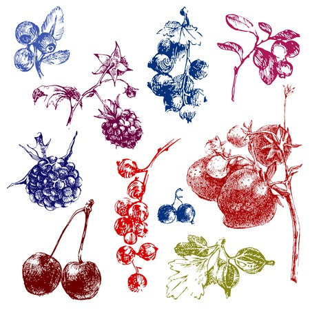 Colorful hand dawn berries over white background Illustration