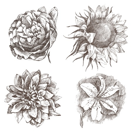 engraved image: 4 highly detailed hand drawn flowers