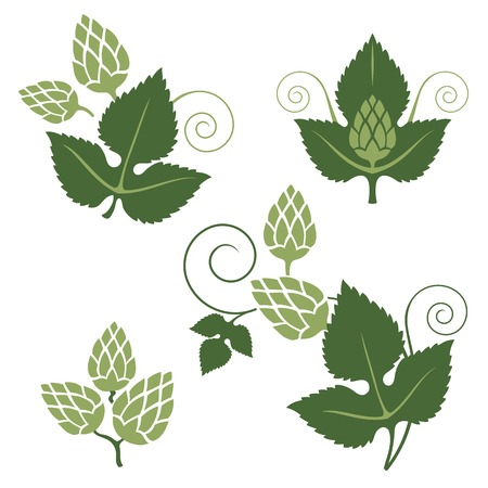 flowers close up: stylized hop elements for your designs Illustration