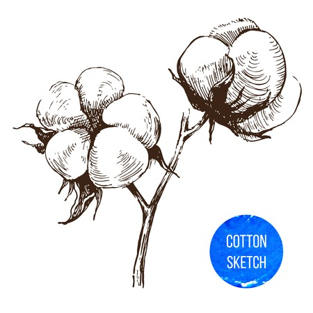 cotton bud: Hand drawn cotton brunch in vintage style Illustration