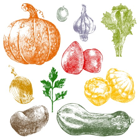 hand drawn bright vegetables icons Vector