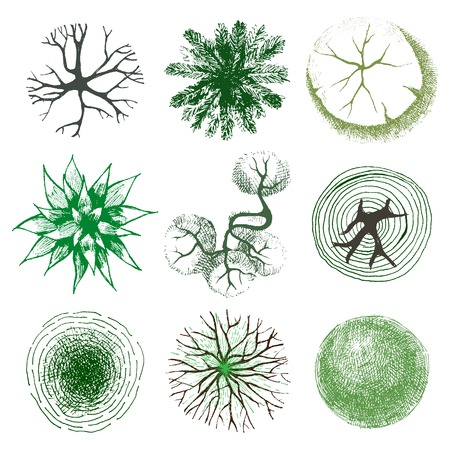 Hand drawn trees - top view