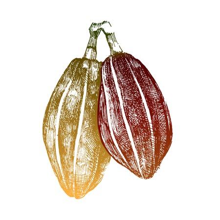 dibujados a mano los granos de cacao en el estilo vintage