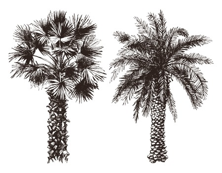 arbol: 2 dibujados a mano palmeras en estilo retro Vectores