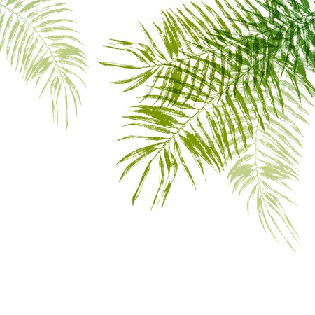 foliage frond: Hand drawn palm tree leaves background