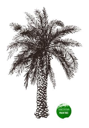 Hand getrokken palmboom in retro stijl Stock Illustratie