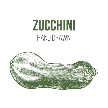 marrow squash: hand drawn green zucchini isolated on white background