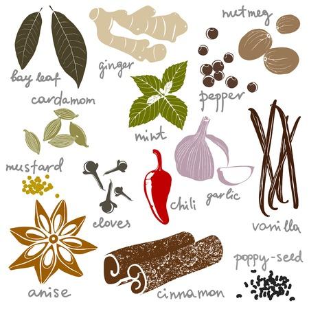 frutas secas: especias estilizadas establecen sobre fondo blanco Vectores