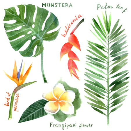 tropical bird: hand drawn watercolor tropical plants