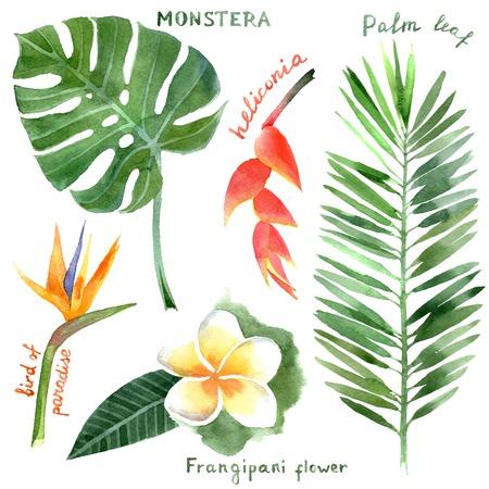 jungle green: plantas tropicales acuarela dibujado a mano
