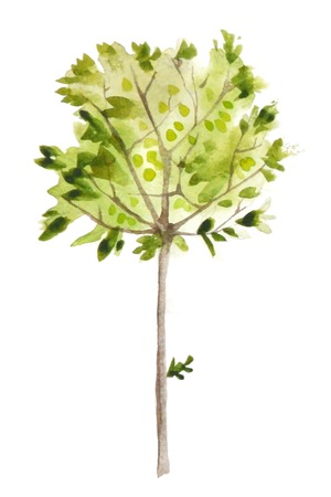 watercolor olive tree over white background