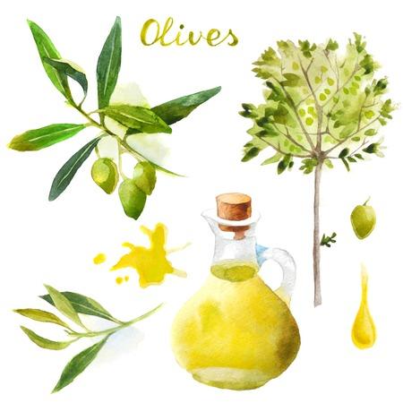 foglie ulivo: Olive altamente dettagliate acquerello set Vettoriali