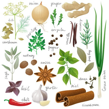 Large set of herbs and spices Illustration