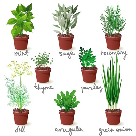 8 different herbs in pots
